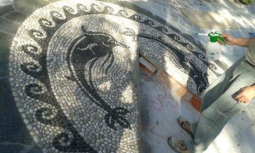 risseu ligure delfino